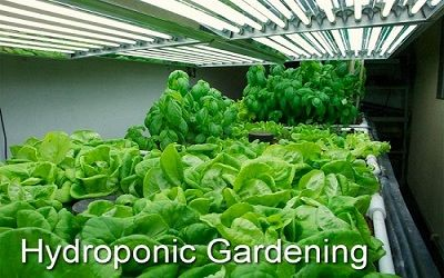 Importance of Hydroponic Lights in Gardening  https://mjrichardsgrowsupply.com/blog/importance-of-hydroponic-lights-in-gardening-338daa/