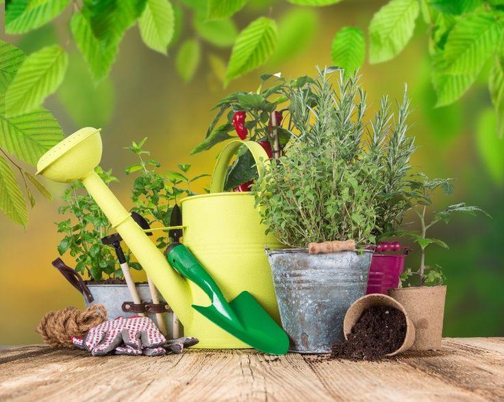 Pour économiser de l'argent et par soucis d'écologie, je vous suggère plusieurs petits trucs afin de réutiliser des produits de tous les jours pour nourrir votre jardin et vos plantes :)