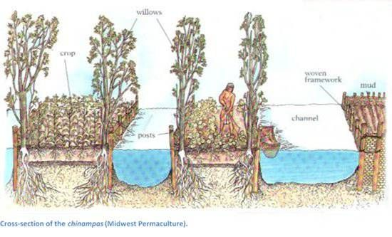"chinampa (""floating"" garden)"