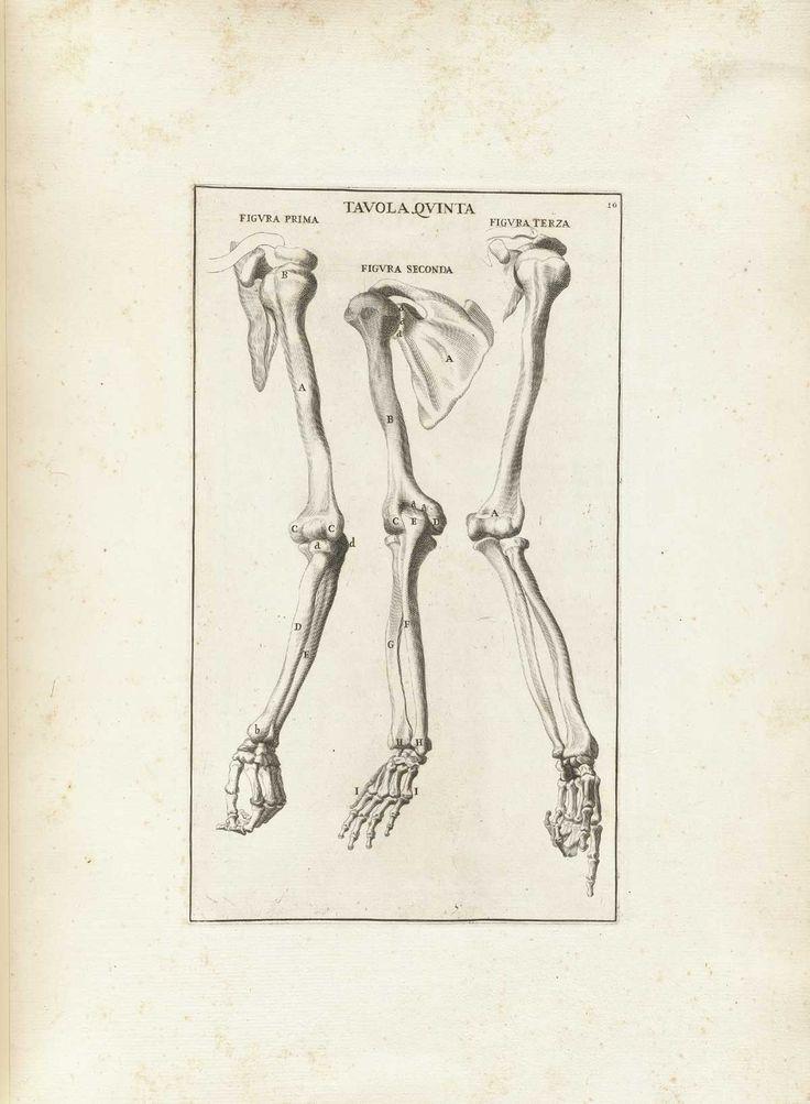 Historical anatomies...