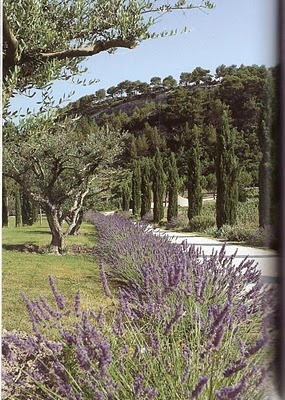Olive, lavender, and cypress.