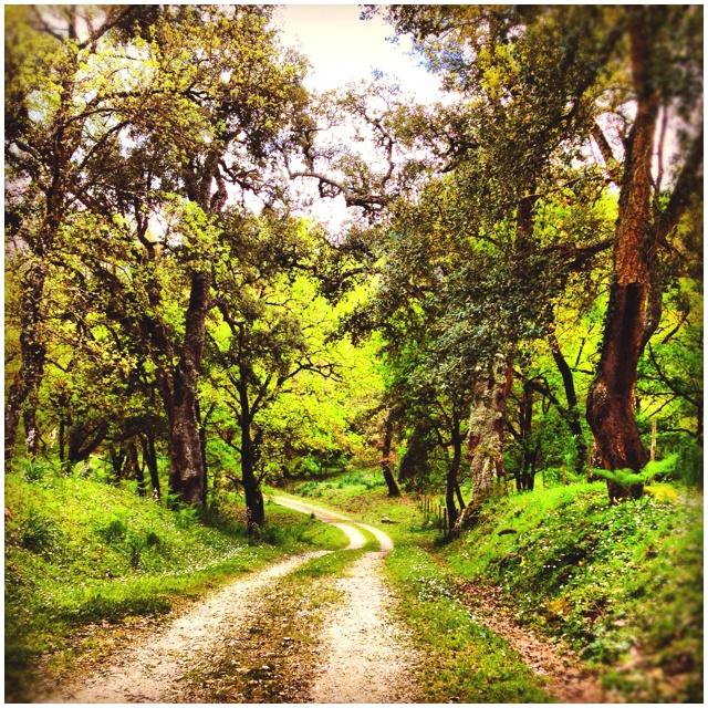 Andar per boschi a Marineo