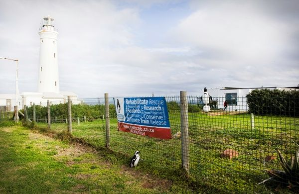 SANCCOB Eastern Cape centre in Cape St Francis