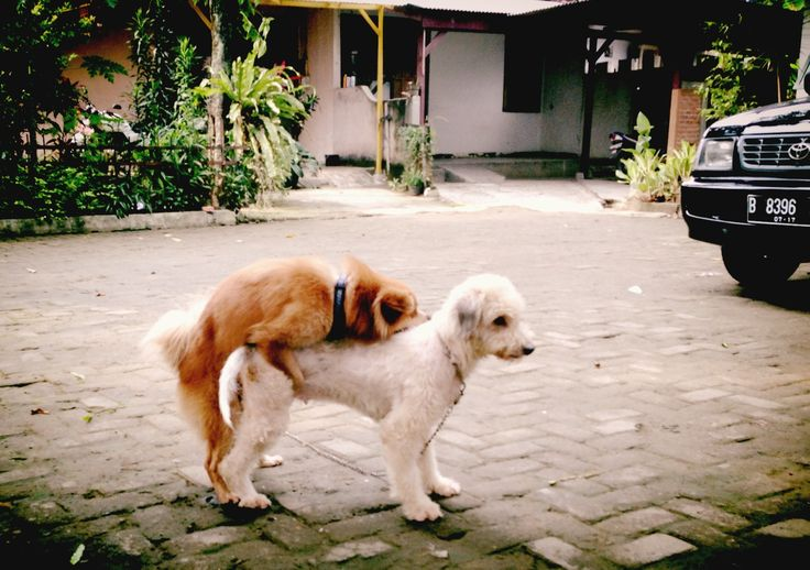 Dogs Mating Dogs Animals