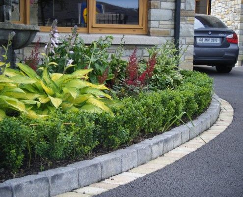 Buxus hedge with mixed herbaceous planting to provide summer colour to the driveway.