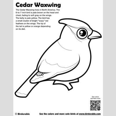 Best 25 Cedar waxwing ideas on