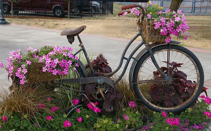 Petunias planted in straw in bicycle baskets