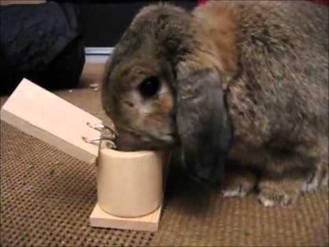 Les jeux chez le lapin de compagnie - Vidéo Association Marguerite & Cie