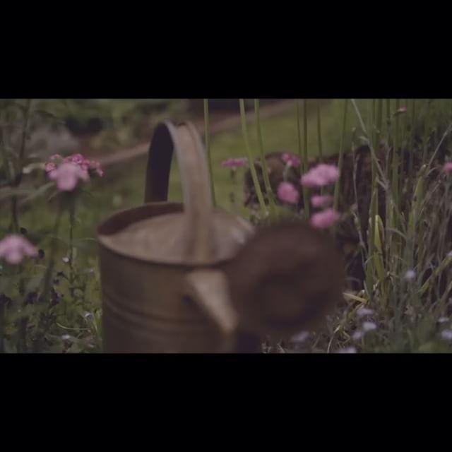 Z bliska . #cat #friend #pet #film #shortfilm #beautiful #natural #inspiration #eco  #nature #naturelover #wild #nazajutrzfilm #vintage #rustic #rustykalny #spring #wiosna #art #birds #ptaki #ogród  #garden #artfilm #ilovefilm #nazajutrz #filmowiec #filmowcy #filmslubny #weddingfilm