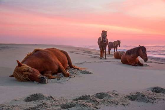 ASSATEAGUE ISLAND, MARYLAND & VIRGINIA  Camp out on the beach in the company of the wild horses that call this island home. Assateague is an affordable way to spend a few days sprawled out on the sand and is a short drive away from Ocean City, Maryland.     - Michael Rickard/Getty Images