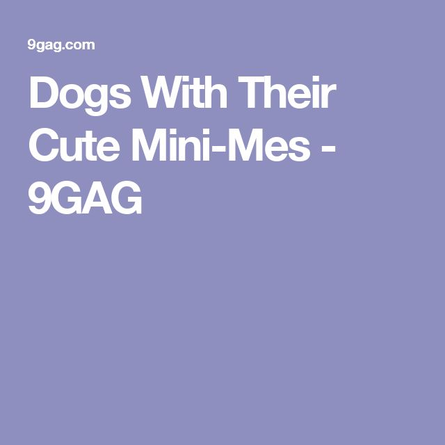 Dogs With Their Cute Mini-Mes - 9GAG