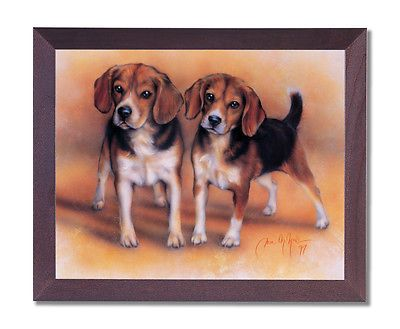 Hunting Beagle Puppies For Sale