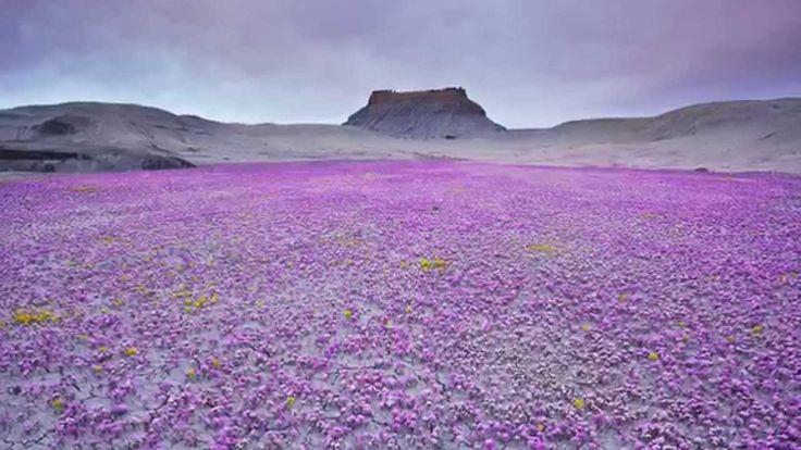 Elephants and Flowers Botanicals: Desierto de Atacama y Flores de Malva