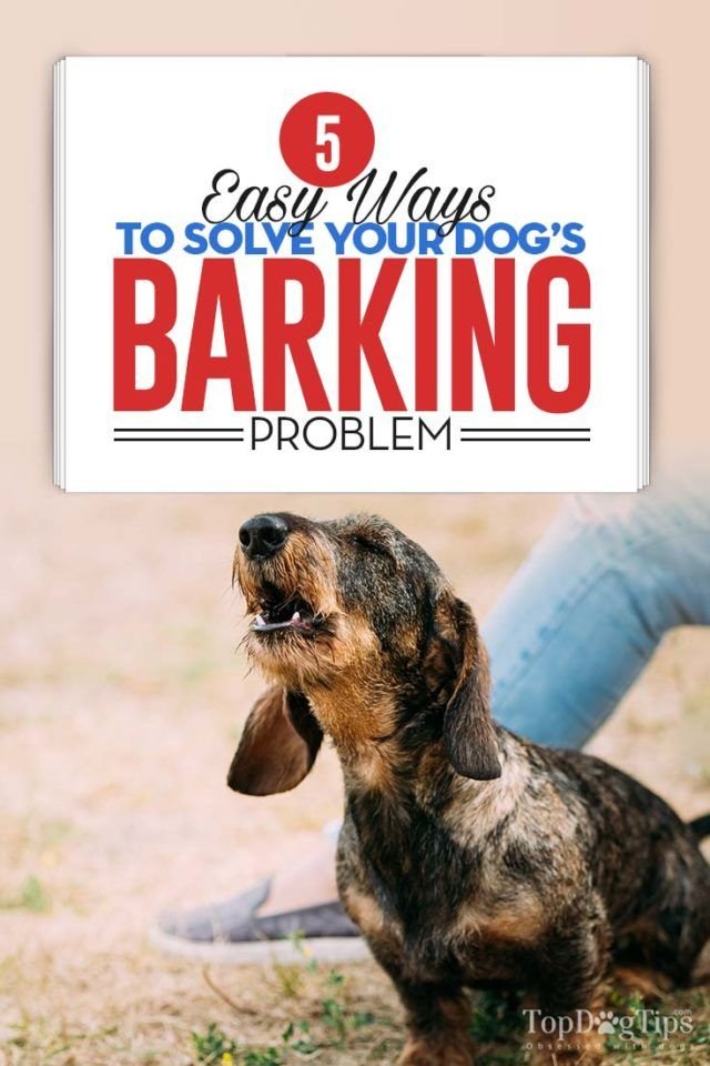 5 Ways To Solve Your Dog S Barking Problem All About Pets Dog