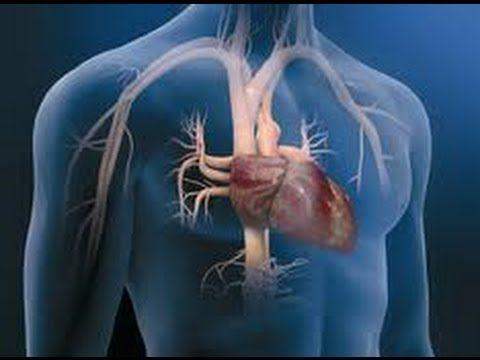 17 best Anatomía Del Corazón images on Pinterest | Anatomía del ...