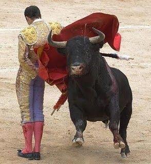 bullfighting:
