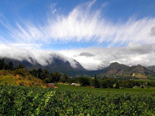 Stellenbosch View, South Africa