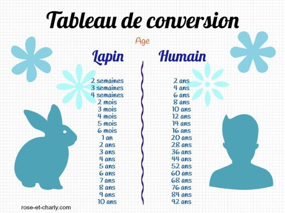 tableau-age-lapin-humain