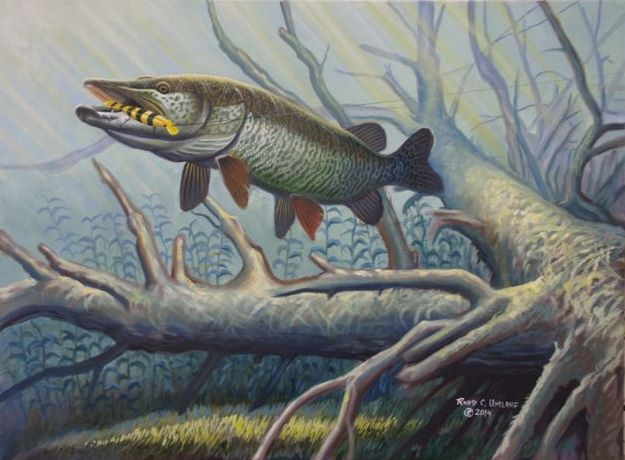 Musky eating a swim wizz bait musky fishing pinterest for Muskie fish pictures