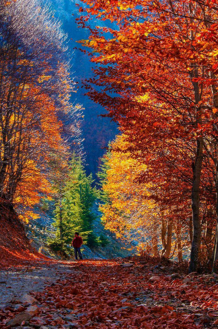 M s de 20 ideas incre bles sobre paisaje de oto o en - Imagenes paisajes otonales ...