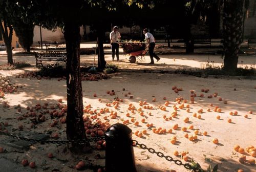 ouilavie:  Stuart Franklin. Spain. Oranges on the ground. 1999.