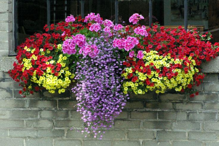 balconniere-fleurs-printemps-amour.jpg (760×508)