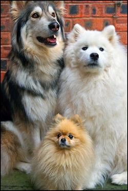 Great dog portrait