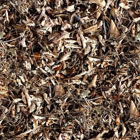 Textures Texture seamless | Leaves dead texture seamless 13138 | Textures - NATURE ELEMENTS - VEGETATION - Leaves dead | Sketchuptexture