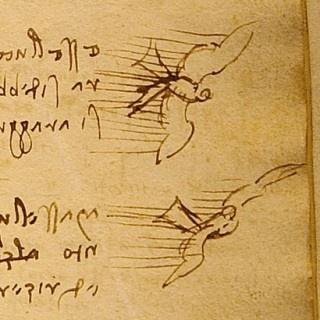 Leonardo Da Vinci, Disegni contenuti nel Codice sul volo degli uccelli, 1505 circa, Biblioteca Reale di Torino.