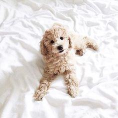 ☾ Amäłi Hiłtøn ☾ ---  cute, puppy, adorable, aesthetic, cuties, blue eyes, dog, dogs, cuddle, hug, fluffy.