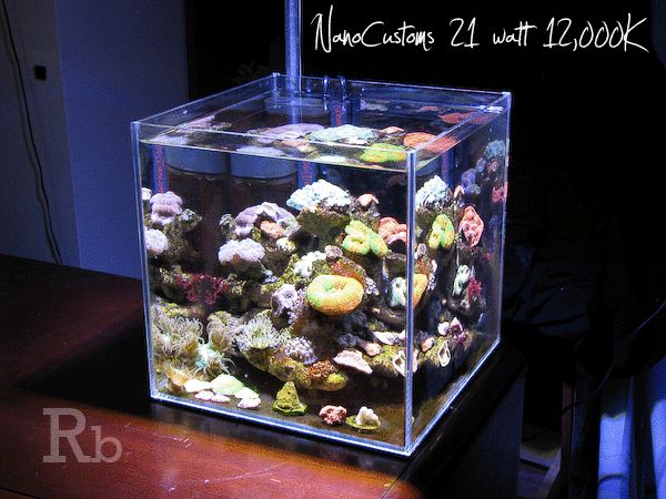 Superb Five Ways Nano Reefs Are Changing The Way We Do Reef Tanks
