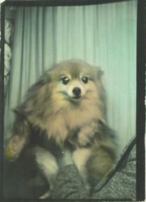 #photomaton #photobooth #dog