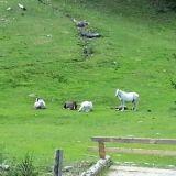 """#Concorso #GreenMarathon Tappa 1 Spostati #Green. Eleonora: """"Appena possibile vivere nella #natura e andare a #cavallo"""""""