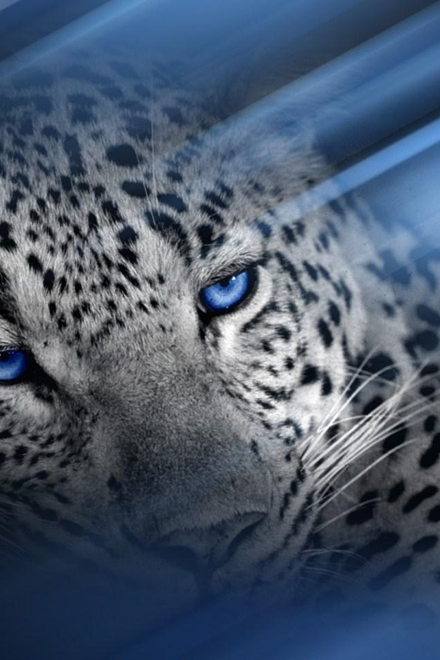 kitty cat blue eyes :)