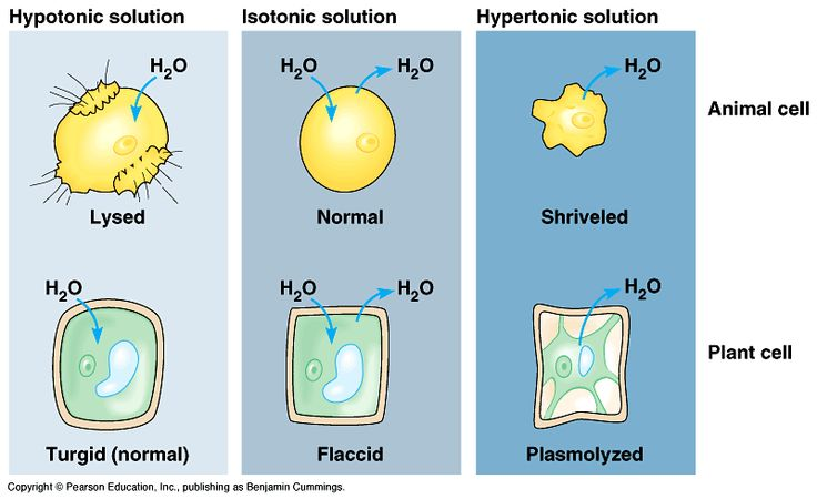23 Best Isotonic  Hypotonic  Hypertonic Images On