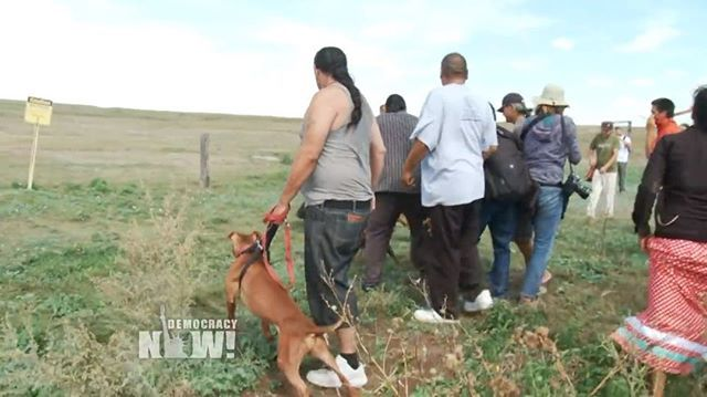 On September 3, the Dakota Access pipeline company attacked Native Americans with dogs and pepper spray as they protested against the $3.8 billion pipeline's construction. If completed, the pipeline would carry about 500,000 barrels of crude per day from North Dakota's Bakken oilfield to Illinois. The project has faced months of resistance from the Standing Rock Sioux tribe and members of nearly 100 more tribes from across the U.S. and Canada -- Watch full length video at…