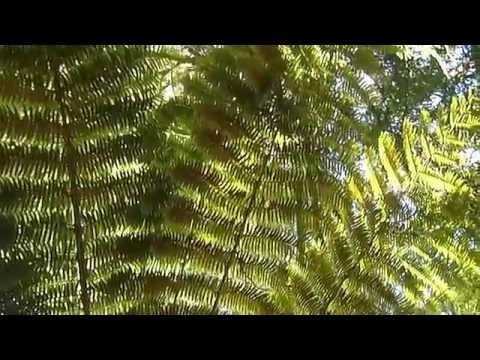 Millbrook Reserve, Christchurch, New Zealand - extended - YouTube