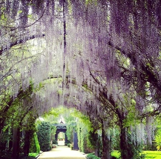 10 of Melbourne's Best Spring Gardens - Melbourne- need to visit