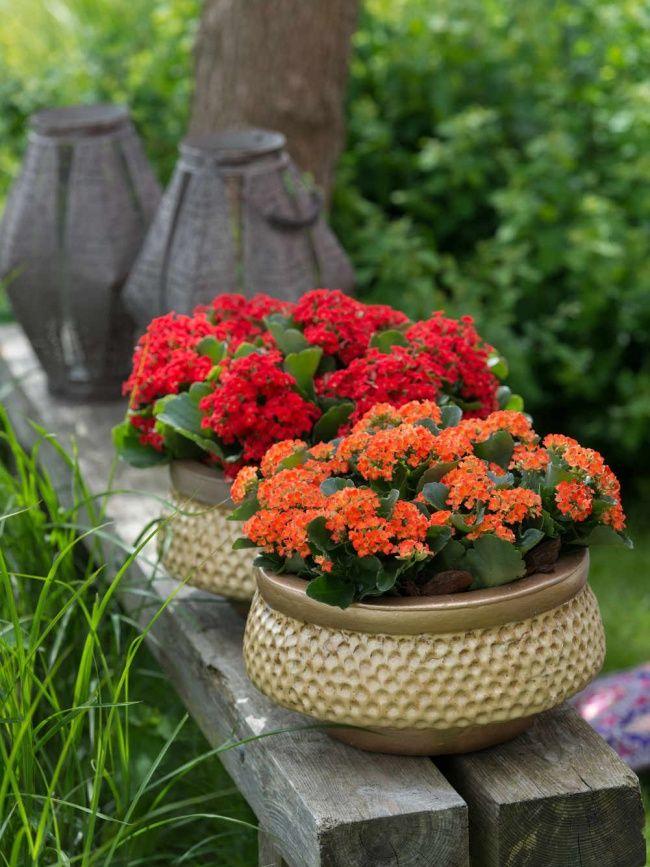 Sommerfrische mit der Kalanchoe #pflanze #pflanzenfreude #plants #planters #pflanzen #garten #kalanchoe