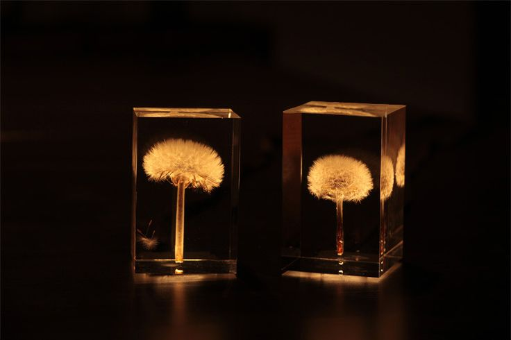 OLED Dandelion Lights by Takao Inoue