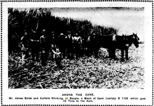 1910 Mr James Bates and Cutters working at Bauple