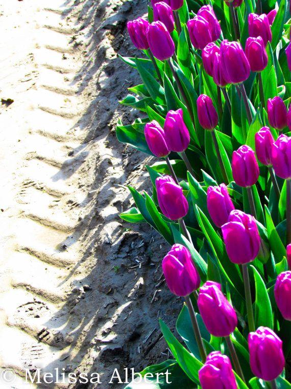 Tulips and Tracks