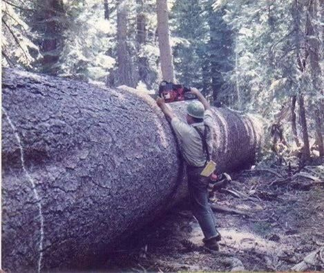 1000+ images about Logging on Pinterest | Logging equipment, Chainsaw ...