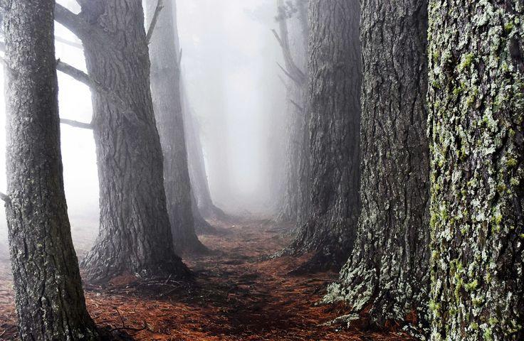 https://flic.kr/p/U5xiy5 | Port Hills fog | Christchurch, New Zealand