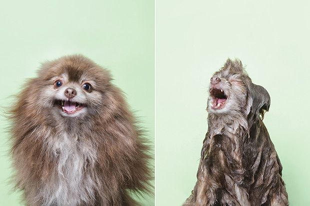 You'll Love These 10 Hilarious Pictures Of Dogs During Bath Time | House & Home