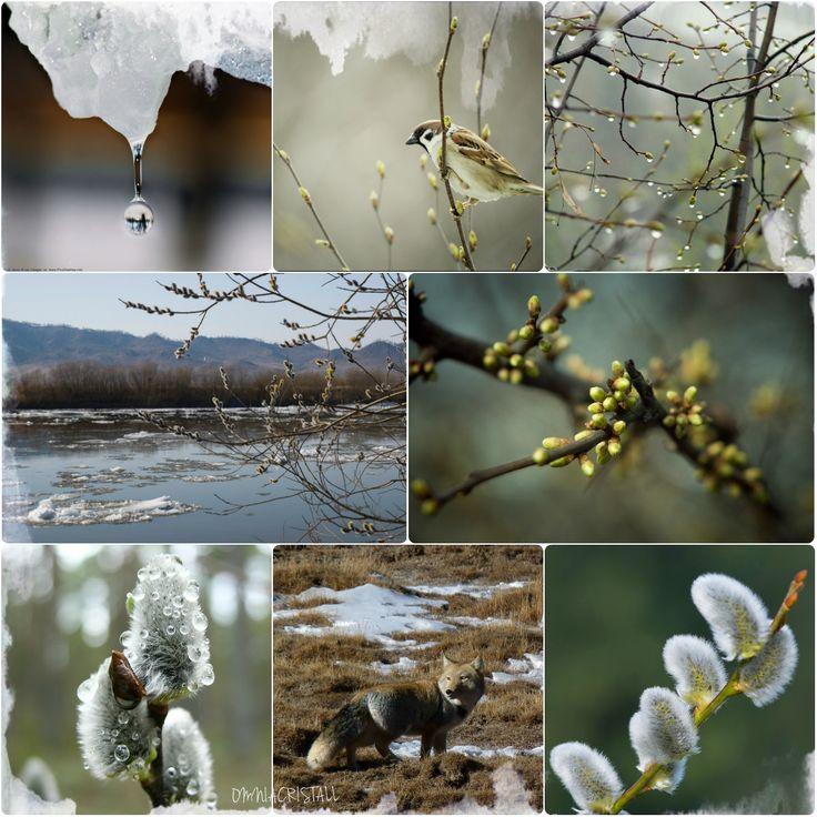 Весна пахнет по-особенному: талой водой, влажной землей, замерзшей травой, что пряталась под снегом целых три месяца, теплыми перьями птиц, отсыревшей побелкой, ссадиной на коленке, грязными брызгами первых ручьев и зарождающимися листьями; внутри деревьев со звуком бурлящего кипятка бежит жизнь - новое возрождение природы. Отбросьте дела и тяжелые мысли на пару минут, чтобы взглянуть вокруг, чтобы почувствовать, чтобы стать частью происходящих метаморфоз, потому что весна уже здесь...(с)
