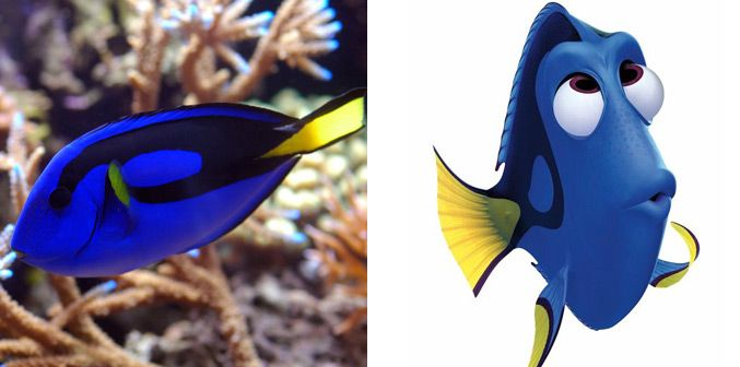 Real fishes compared to the cartoon.