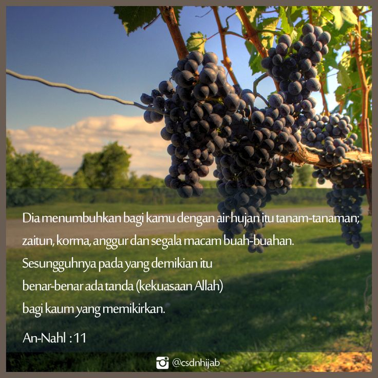 Dia menumbuhkan bagi kamu dengan air hujan itu tanaman-tanaman; zaitun, korma, anggur dan segala macam buah-buahan. Sesungguhnya pada yang demikian itu benar-benar ada tanda (kekuasaan Allah) bagi kaum yang memikirkan. (QS. AN NAHL:11)  #Quotes #Quran #Allah #Alquran #CSDNQuotes #IslamicQuotes #Islam #MuslimQuotes #Muslimah #Reminder