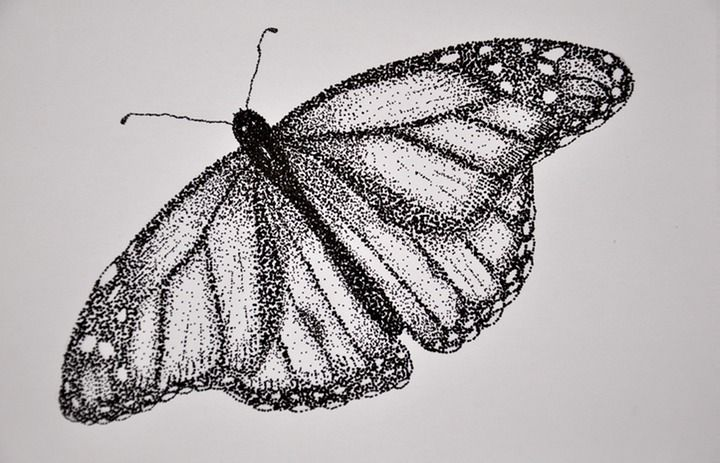Stippling assignment: have students pick out an insect or animal they like and stipple it or make a dot drawing