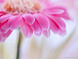 Flower Background HD | HD PowerPoint Templates